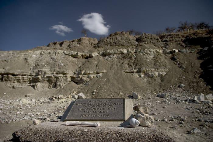 This is where Zinjanthropus boisei was found in 1959