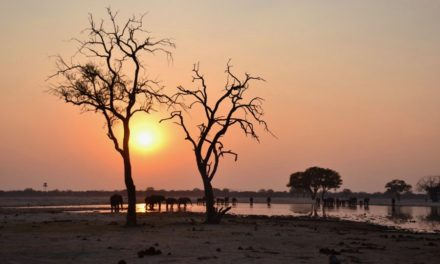 Zimbabwe Safari – Connect with your wild side