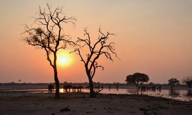 Zimbabwe Safari – Connect with your wild side