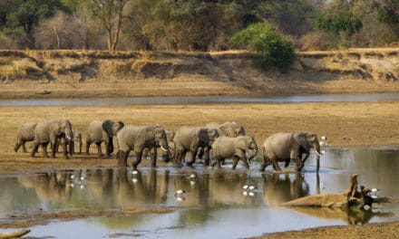 Zambia Safari – Africa's underrated gem