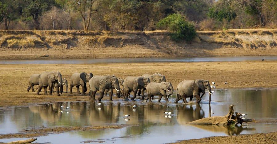 Zambia safari – Africa's underrated gem