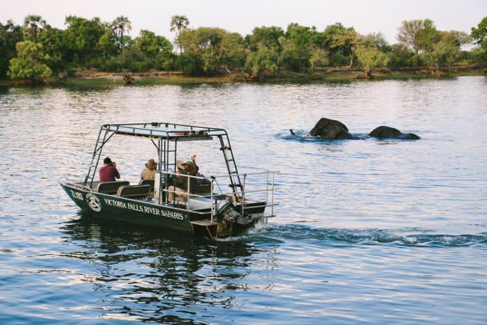 Tourists watching bathing elephants on a Zambezi river cruise