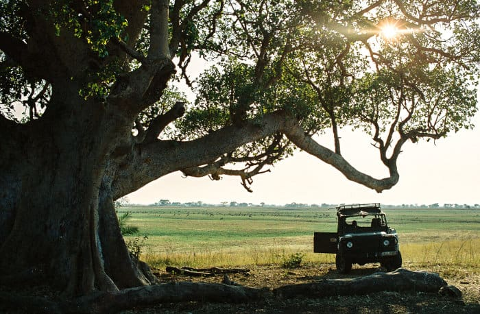 Jeep under a Marula tree in Kafue National Park