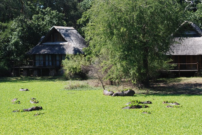 Hippo pool in front of a lodge in South Luangwa