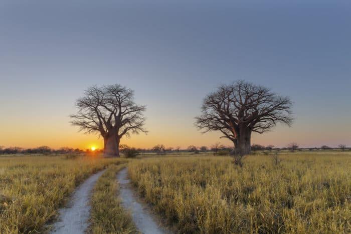 Sunrise at Baines Baobabs campsite in Nxai Pan