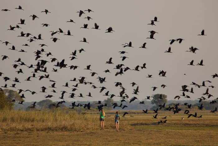 Two girls in the Busanga plains observe a flock of African openbills flying over their heads