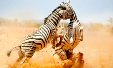Namibia safari – The complete guide for first-time visitors