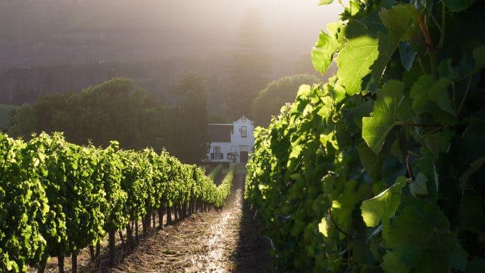 Local favourite Buitenverwachting wine estate