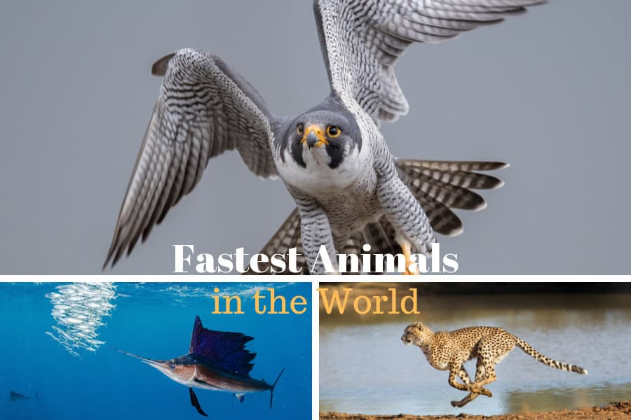 15 of the fastest animals on planet Earth