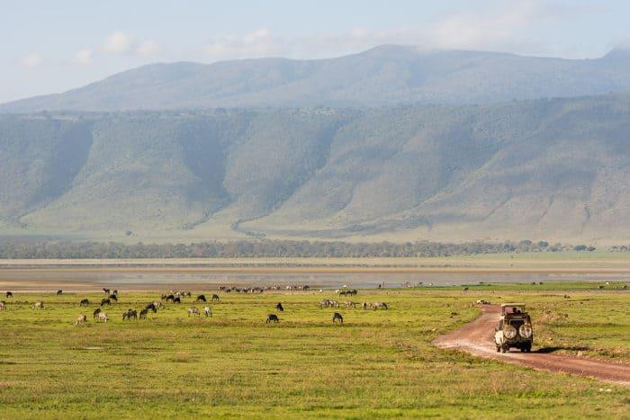 Typical wildlife scene on a Ngorongoro safari experience