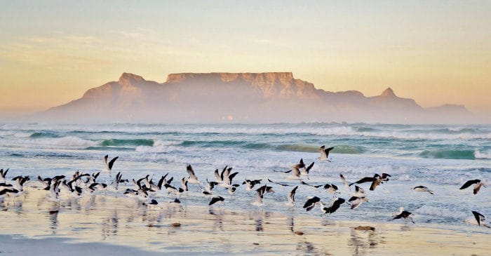Beach and seagulls, with Table Mountain in the background