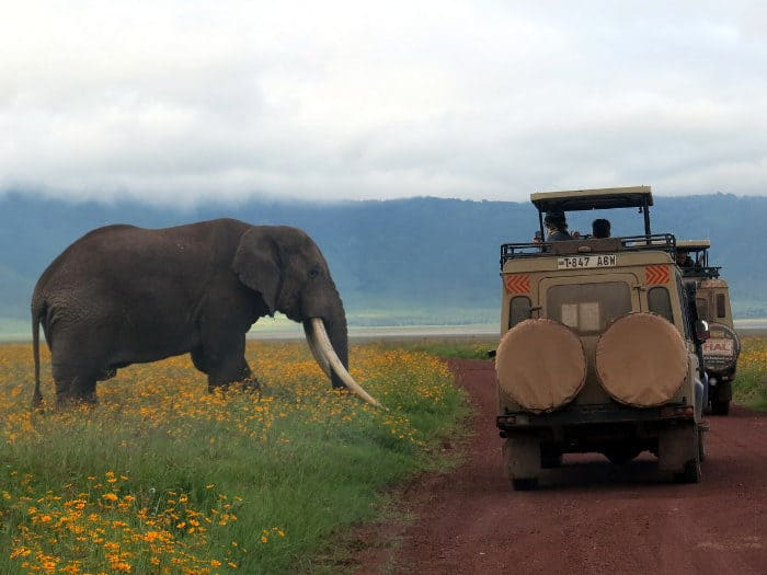 Big male tusker goes past safari vehicles in Ngorongoro Crater