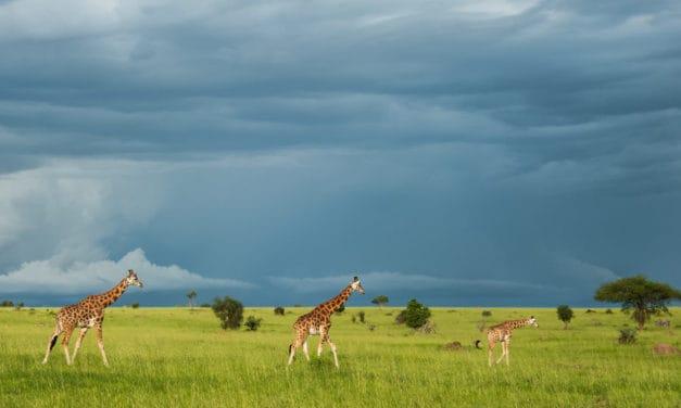 Uganda Safari – Planning guide for first-time visitors