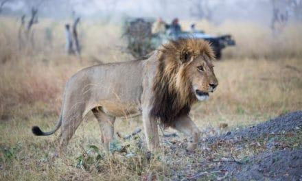 Linyanti – Extravagant, exclusive and expensive Botswana safari