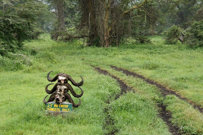 """Rangers only"" sign with Cape buffalo skulls in the Lerai Forest"