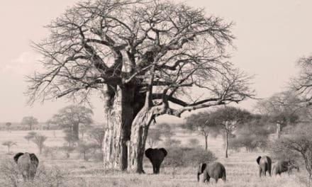 Tarangire national park safari guide