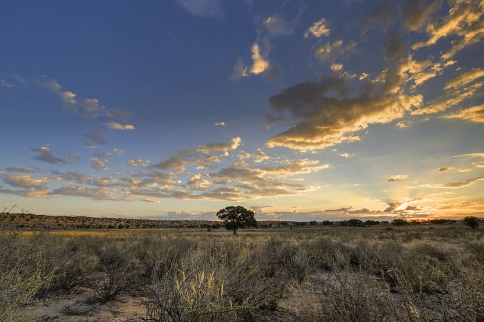 Kgalagadi desert beauty at sunset