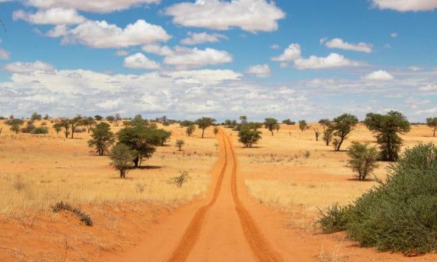 Kgalagadi Transfrontier Park safari guide