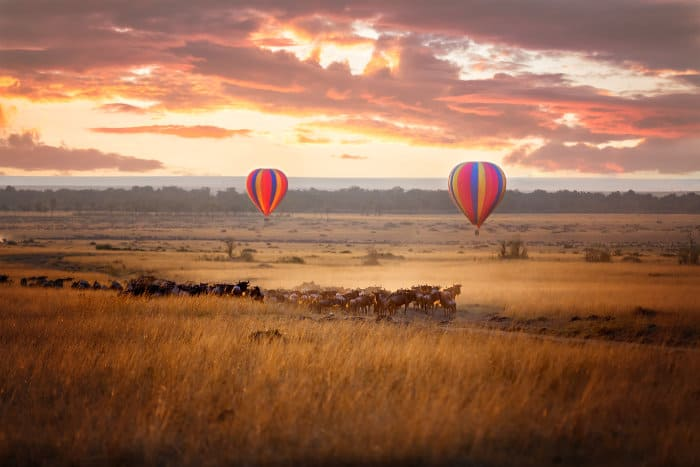 Sunrise over the Masai Mara, with a pair of coloured hot air balloons and a herd of wildebeest below