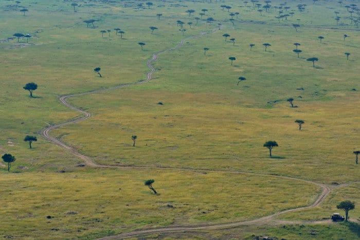 Winding road pattern in the Maasai Mara