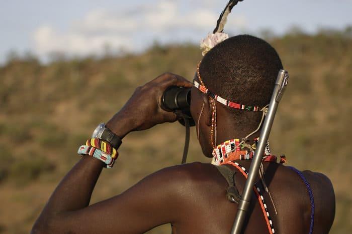Samburu masai guide scans the horizon with binoculars to find animals