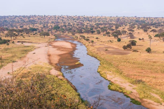 Typical Tarangire landscape with seasonal river