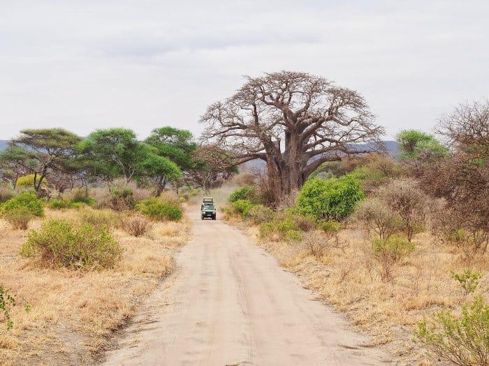Jeep and baobab tree in Tarangire National Park