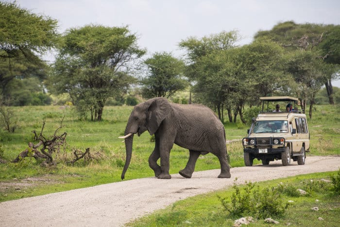 Elephant crosses the road in front of safari jeep in Tarangire National Park