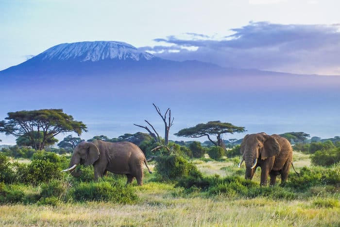 Elephants with Mount Kilimanjaro as a backdrop