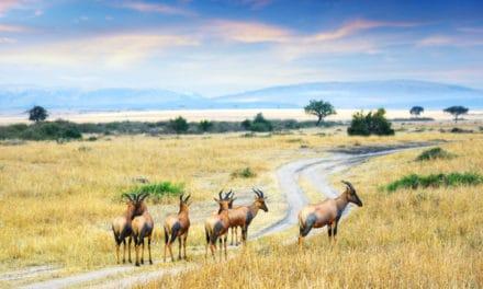 Masai Mara – Independent safari planning guide
