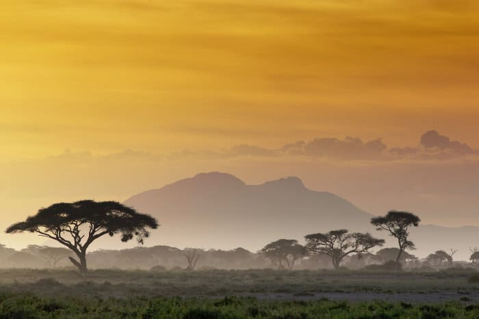 Typical landscape on an African safari