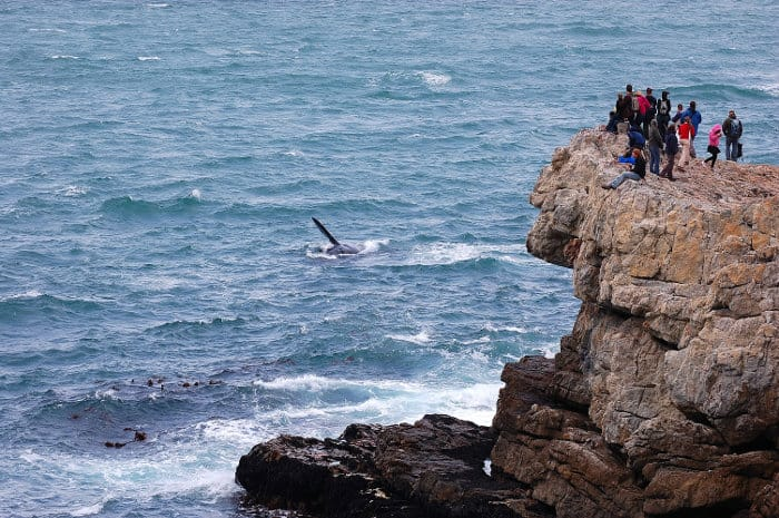 Watching whales from a cliff in Hermanus