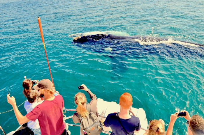 Tourists enjoy a close encounter with a southern right whale near Hermanus