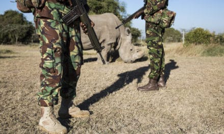 Northern White Rhino – Can we learn from a sad tale?