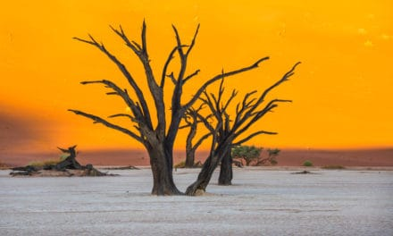 Deadvlei is far more impressive than Sossusvlei – Here's why