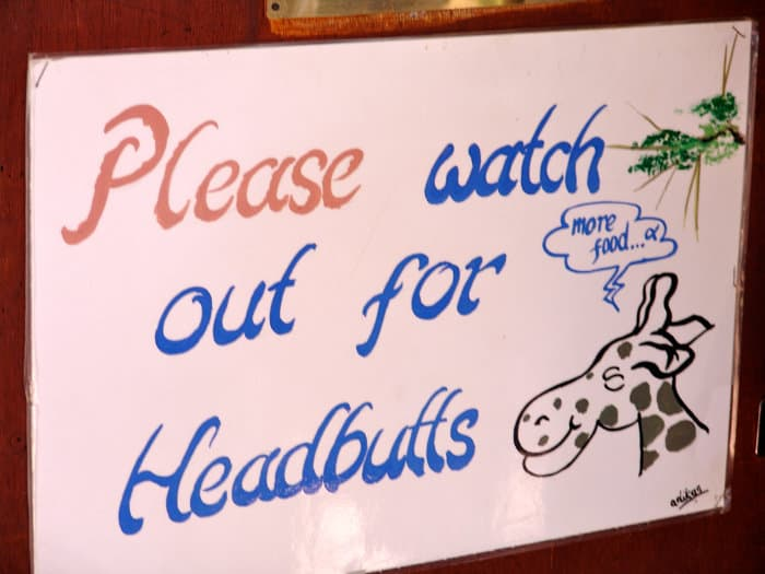 Please watch out for headbutts - Giraffe Centre friendly notice
