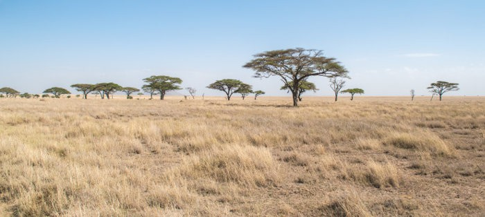Typical savannah landscape in Africa