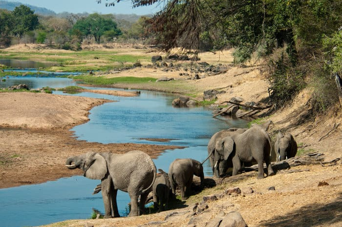 Elephants quench their thirst in the Great Ruaha River, in Tanzania