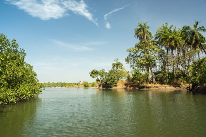 Tributary of River Gambia in The Gambia