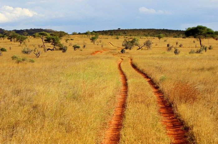Dry path going through Tsavo's savannah plains