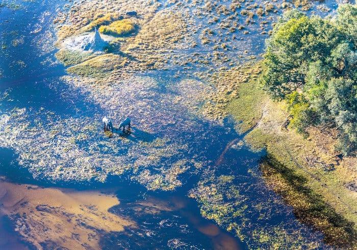 Elephants from above in the Okavango Delta
