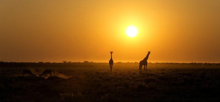 Giraffe silhouettes at sunset in Etosha National Park