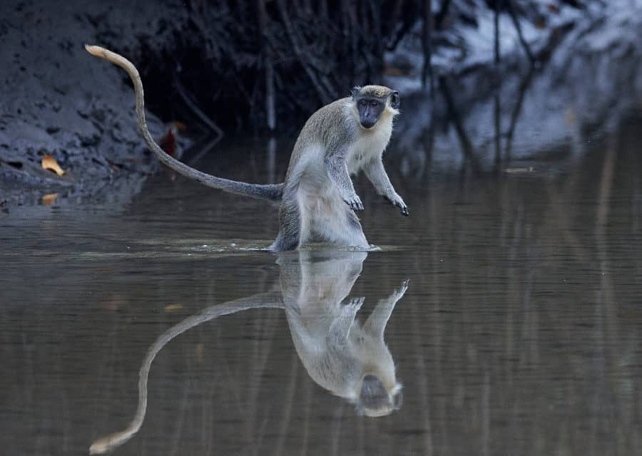 Plan an unguided wildlife safari in The Gambia