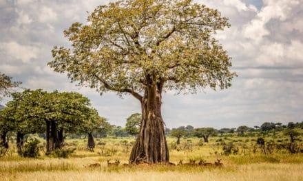 Ruaha National Park: a fascinating escape