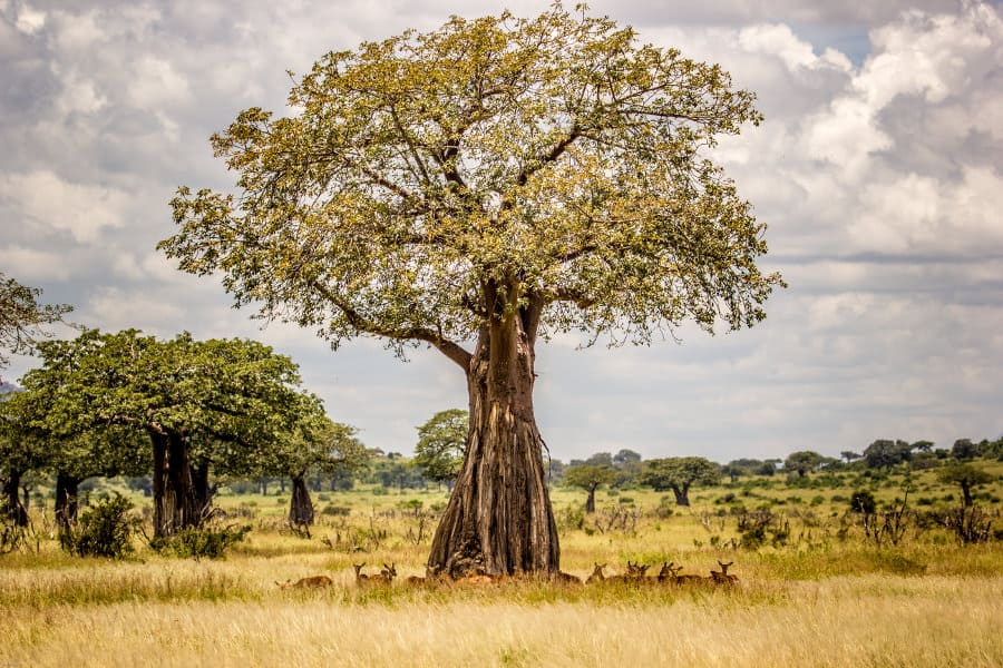 Ruaha National Park: a fascinating escape