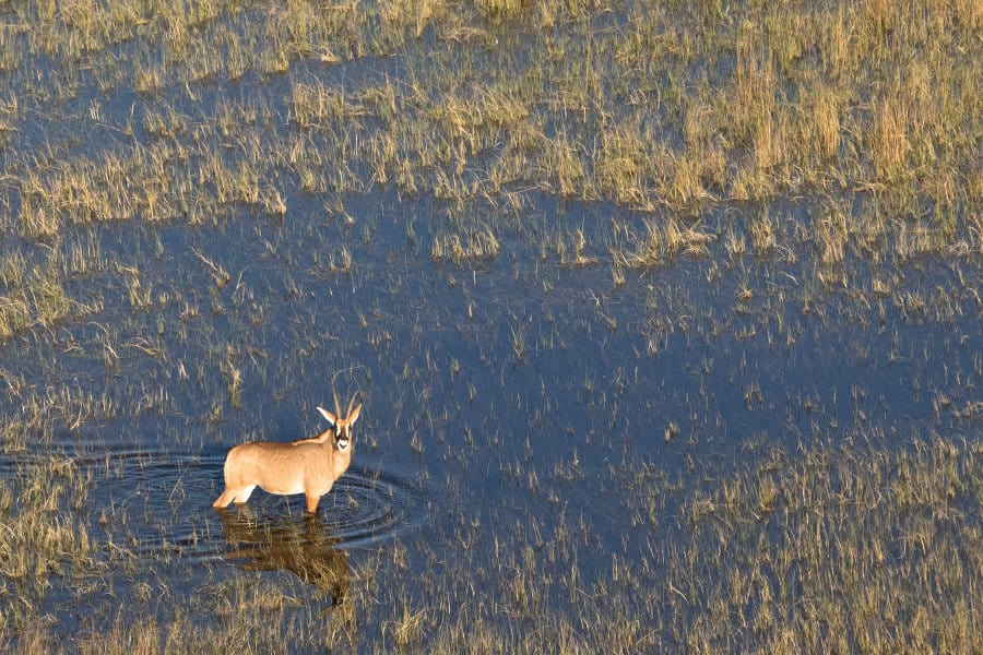 Moremi Game Reserve – Okavango's heart