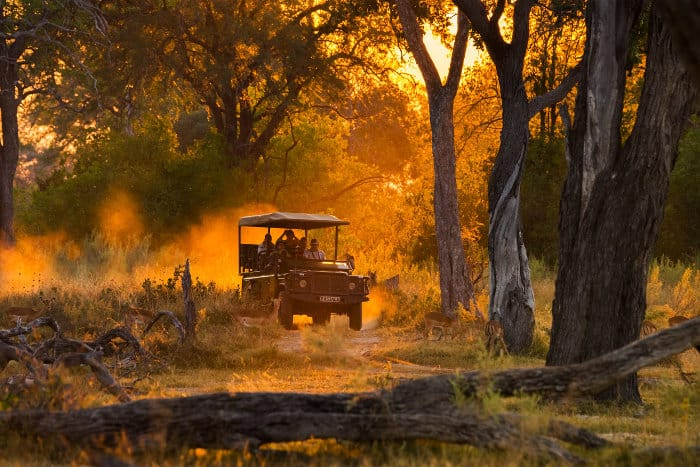 Tourists observe a herd of impala on a late afternoon game drive in Moremi
