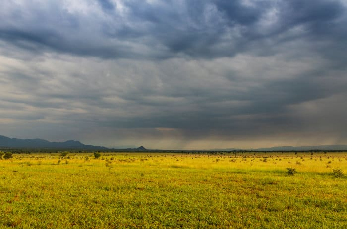 Dark clouds dominate the vast savannah of Kidepo Valley in Uganda