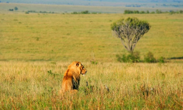 African Savanna – Pure wildlife magic