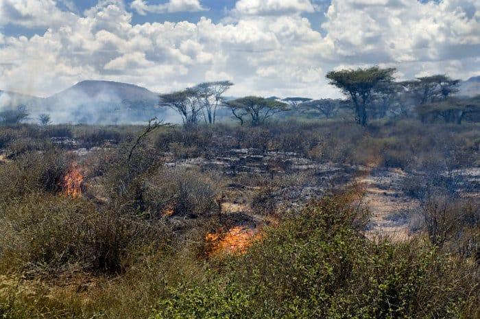 Wildfire on the savannah in Kenya